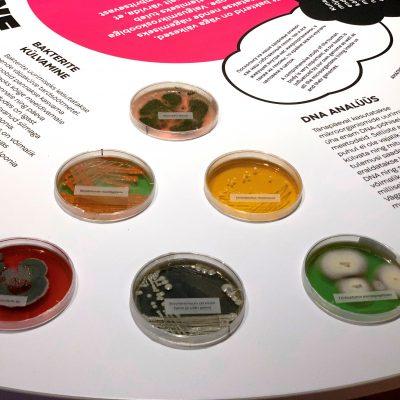 """""""Muuseum muuseumis"""" külla tuleb Eesti Tervishoiu Muuseum"""